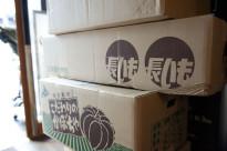 吉田農場さんから届いた段ボール一杯の野菜たち